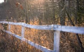Обои осень, трава, природа, забор
