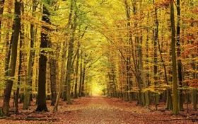 Картинка дорога, осень, лес, листья, красиво