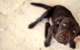 Картинка взгляд, друг, собака, пес