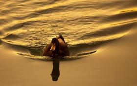 Обои вода, природа, пруд, птица, утка