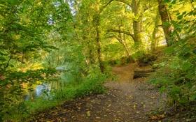 Картинка дорога, лес, деревья, река