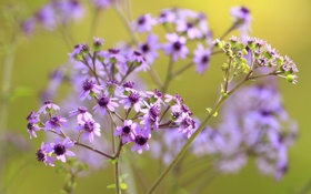 Обои поле, природа, растение, лепестки, луг, соцветие