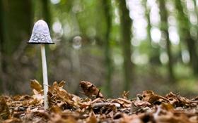Обои листья, макро, природа, гриб
