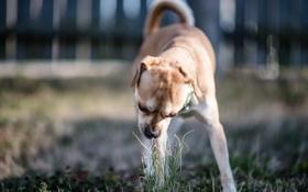Обои трава, собака, двор