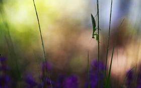 Обои трава, цветы, фон, богомол, травинки