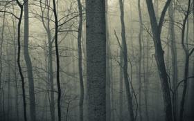 Картинка сумрак, осень, лес, силуэты, стволы, тени, деревья