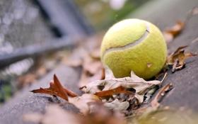 Обои осень, листья, настроение, мяч, tennis, ball, теннисный мяч