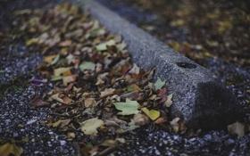 Обои листья, клен, очень