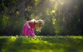 Картинка солнце, природа, платье, девочка, In The Clover