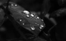 Обои капли, макро, лист, черный