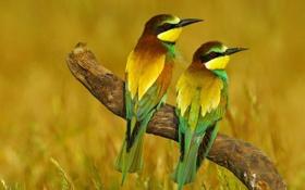 Обои природа, оперение, разноцветные, птицы, сук