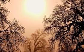 Обои небо, солнце, деревья, пейзаж, закат, природа, sky
