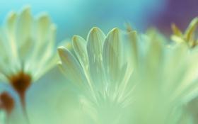Обои макро, цветы, лепестки