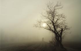Картинка пейзаж, ночь, туман, дерево