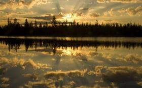 Обои небо, озеро, деревья, сосны, природа, елки, лучи