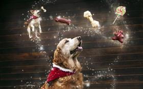 Обои мечты, праздник, собака