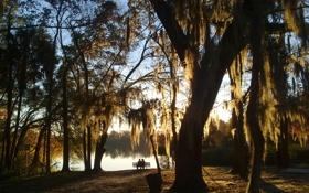 Обои осень, небо, вода, закат, скамейка, парк, дерево