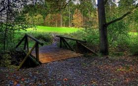 Картинка листья, лес, осень, деревья, мостик, поле, мост