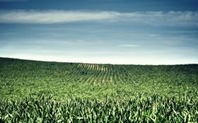 Обои зелень, трава, размытие