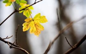 Картинка осень, свет, фон, ветка, жёлтые, листики, последние