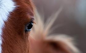 Обои глаз, конь, макро