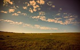Картинка поле, облака, Закат, вечер, лошади, луг