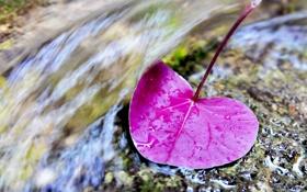 Картинка макро, природа, листок, капли воды
