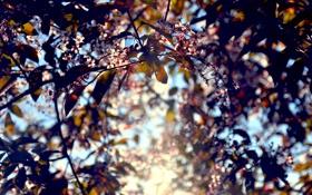 Обои листья, цвета, свет, цветы, Солнце, by mike pro