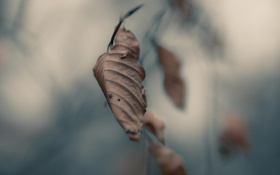 Обои листья, autumn, осень, серость, ветвь, макро