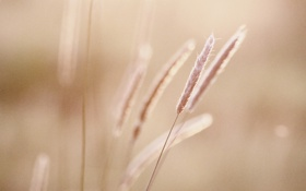 Картинка травинки, солнце, лето