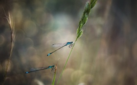 Обои eyes, wings, bokeh, leaf, paws, stalk, dragonflies