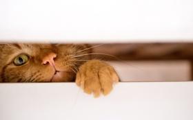 Обои кот, фон, кошак, котяра, лапка, щель