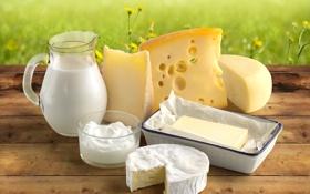 Обои масло, сыр, молоко, сметана