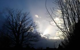 Картинка небо, деревья, пейзаж, ночь, ветки, природа, силуэты