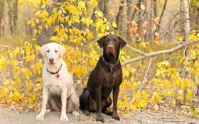 Обои природа, собаки, лето
