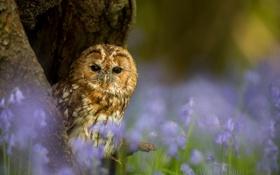 Обои лес, глаза, макро, дерево, сова, птица, окрас
