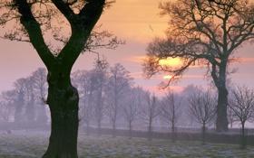 Обои деревья, рассвет, птица, утро, заморозки