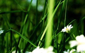 Обои зелень, Nature, цветы
