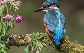Обои птица, ветка, цветки, зимородок