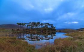 Картинка небо, трава, вода, деревья, тучи, болото