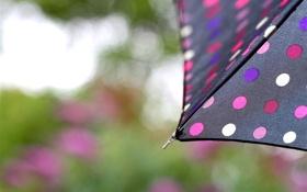 Обои капли, зонтик, дождь, черный, фокус, зонт, горошек