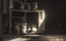 Обои телевизор, ботинки, фон