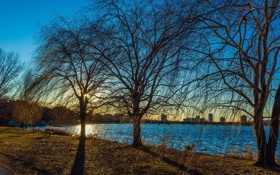Обои деревья, город, река