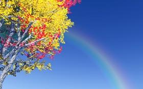 Обои небо, листва, радуга, дерево