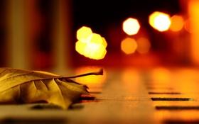 Обои город, осень, Макро, ночь, свет, листок