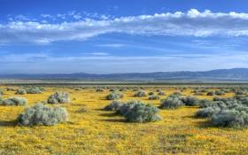 Картинка поле, трава, горы, природа, пейзажи, поля, долина