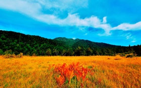 Обои лес, долина, трава, небо, облака, луг, деревья