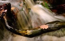 Картинка камни, ручей, ветки, поток, природа, осень, листва