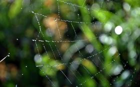 Обои капли, макро, сетка, сеть, пауки, паутина, засада