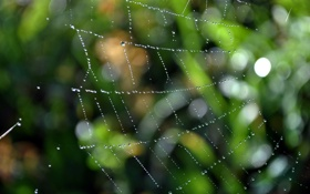 Картинка капли, макро, сетка, сеть, пауки, паутина, засада